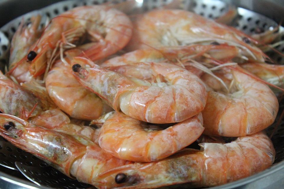 obx shrimp